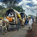 In Hubli the bullock carts travel smooth on Highway 4
