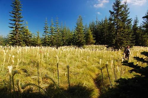 oregon greg hiking beargrass mthoodnationalforest salmonhuckleberrywilderness mcintyreridge
