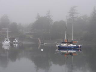 Friday Harbor Fog