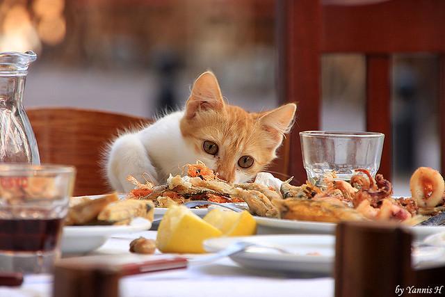 Sea food! Yammi!