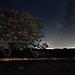 Starry Night - Perseids Meteor Shower by Silver1SWA (Ryan Pastorino)