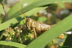 friggen bugs