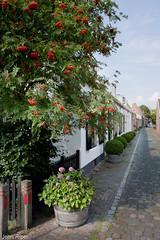 Buren, Gelderland