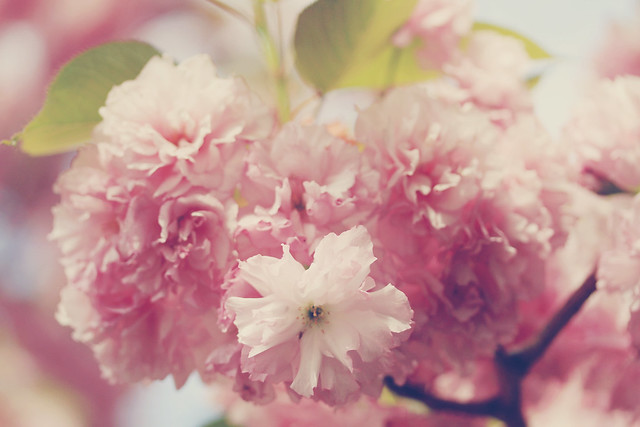 Those pretty pink fleurs