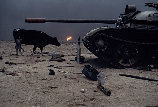 Ahmadi Oil Fields, Kuwait, 1991. Dying cows wander in the burning oil fields, by Steve McCurry