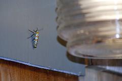 Aloha bugs