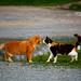 romance by the pond by ssj_george