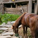A horse eating, Guangxi, China