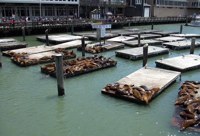 Los leones marinos del Muelle 39