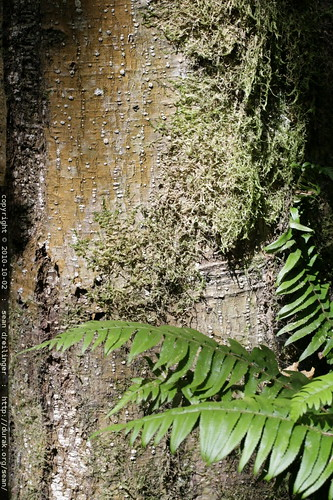tree trunk with moss, lichen, and fern