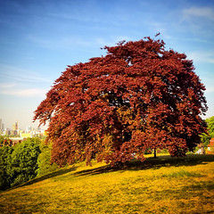 Tree, in Red