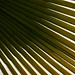 Small photo of Palm leaf