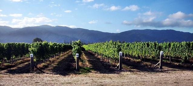 winevines