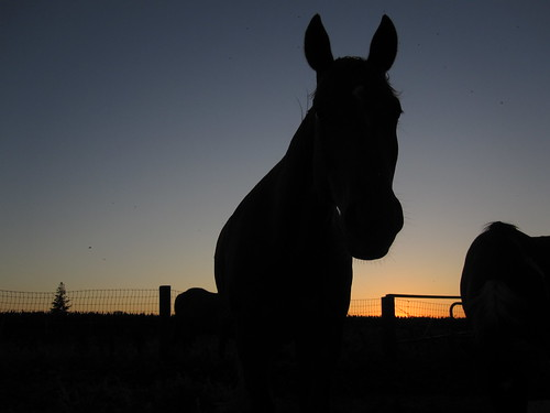 sunset horse silhouette