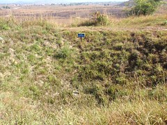 wetland(0.0), wildflower(0.0), ridge(0.0), plateau(0.0), bog(0.0), nature reserve(1.0), trail(1.0), prairie(1.0), land lot(1.0), steppe(1.0), soil(1.0), grass(1.0), shrubland(1.0), natural environment(1.0), meadow(1.0), wilderness(1.0), pasture(1.0), vegetation(1.0), grassland(1.0),