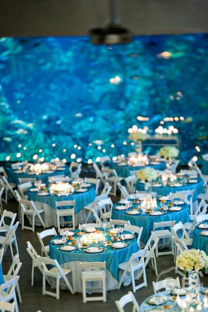 Flickr Seattle Aquarium Events 39 Photostream