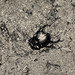 Small photo of A bug's life