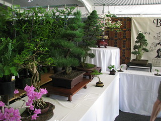 A bonsai display