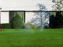 backyard, shrub, flower, garden, grass, artificial turf, yard, green, landscaping, hedge, facade, lawn,