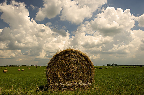 Baling Time Again by Karen Brodie