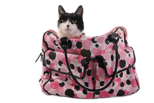 JUNE in the pink polka dot bag