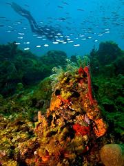 Dive North Coast Haiti