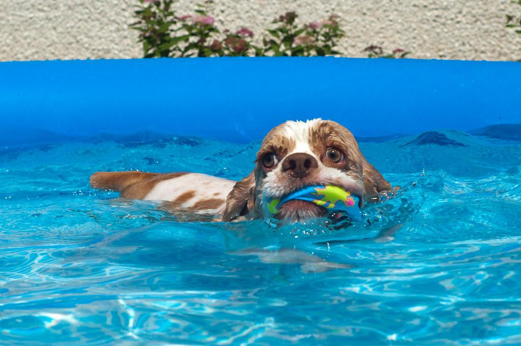 Starbuck swimming