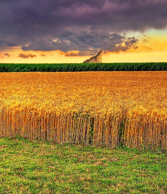 July Clouds Over Kansas Wheat Sunset