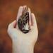 little dead bird by Angélica Vis