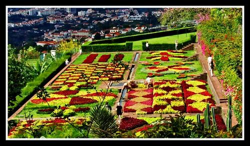 Flower gardens in Madeira