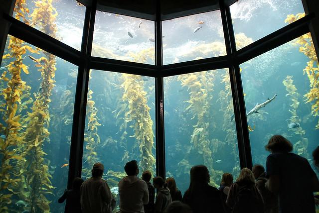 Monterey Bay Aquarium, CA Explore Ernie Reyes photos on F ...