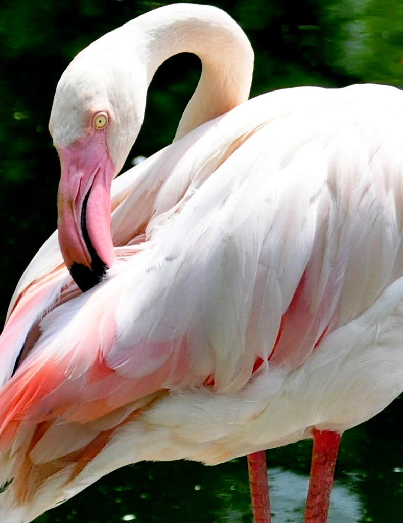 Flamingo 都市火烈鸟 ...