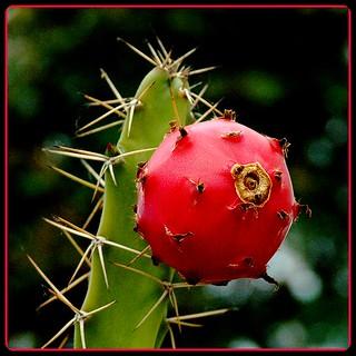 Un fruit au goût piquant dans un petit carré..