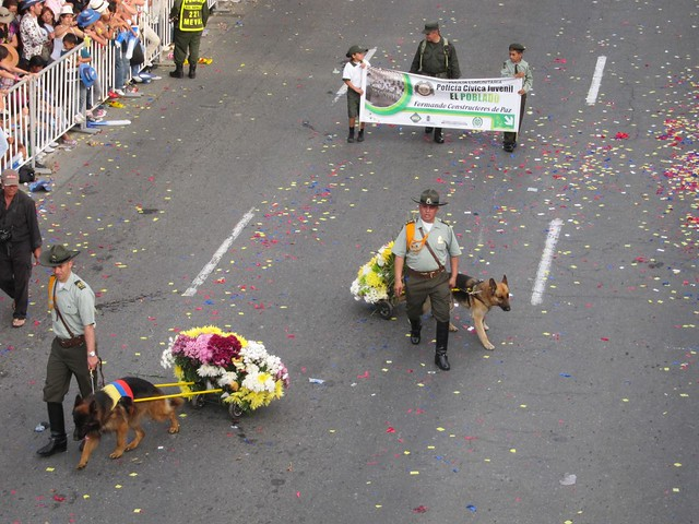 Police dogs pulling custom flower carts!