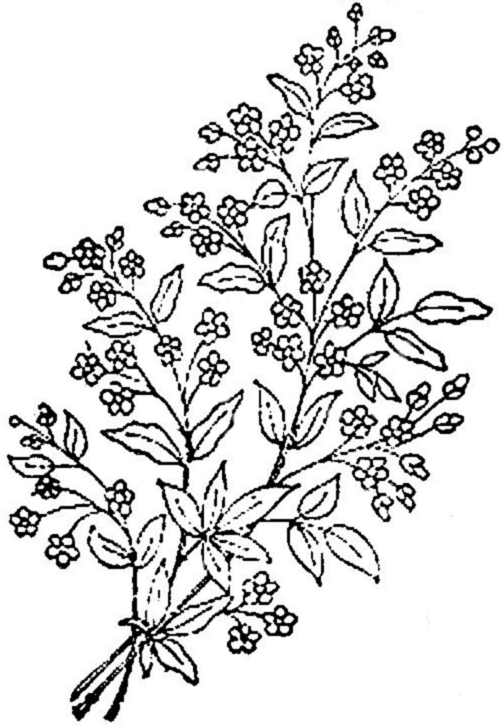 1886 Ingalls Sm Flower