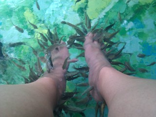 Got a fish pedicure in Cambodia. Little fishies nibbling at your feet. Controversial in the US.