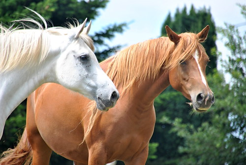 6 Spanish Slang Phrases Using the Word HORSE