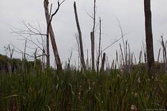 Île Bizard
