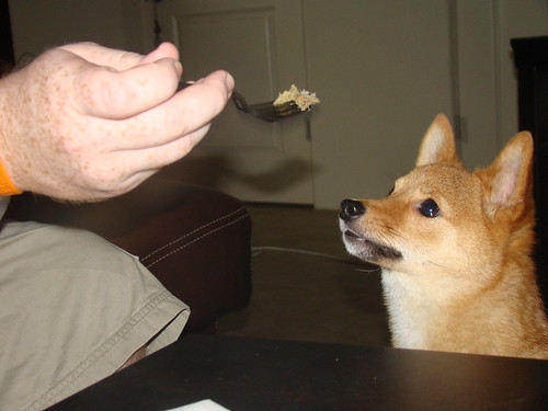 taro shiba, looking at his raw food on a fork