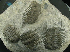 carving(0.0), wing(0.0), sculpture(0.0), relief(0.0), art(1.0), trilobite(1.0), ancient history(1.0), fossil(1.0), stone carving(1.0),