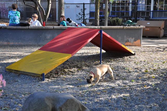 Seattle Dog Park License