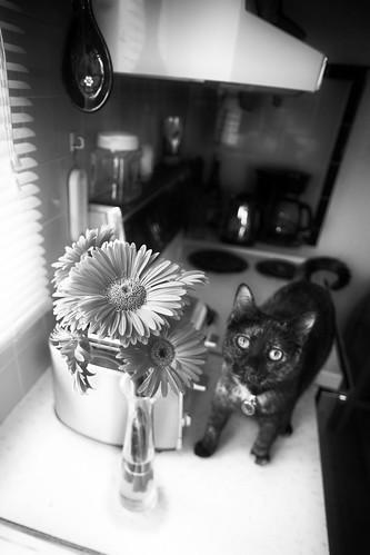 mixi daisy