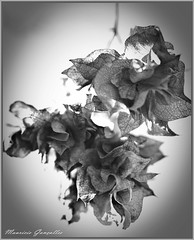 Folhas Mortas !!!  Dead leaves !!!!