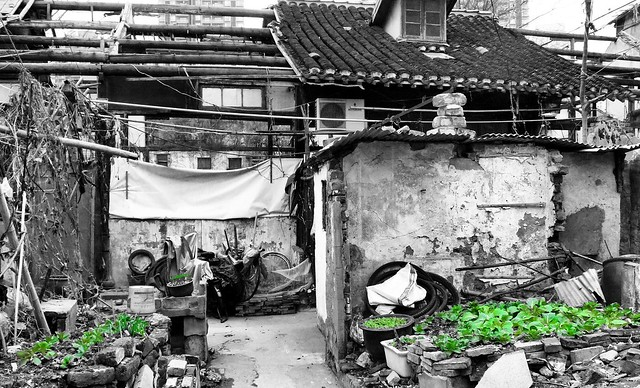 Shanghai - New Life springs from the Ruins
