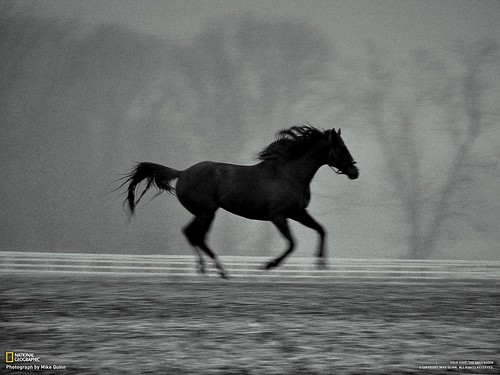 """""""Dream Stride"""" National Geographic Your Shot selection. Published July 2010 to National Geogrpahic IPAD edition."""