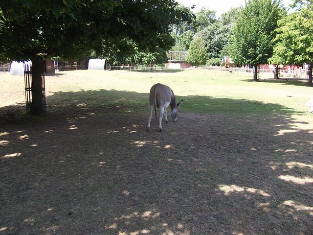 Donkey bum Donkey Bum