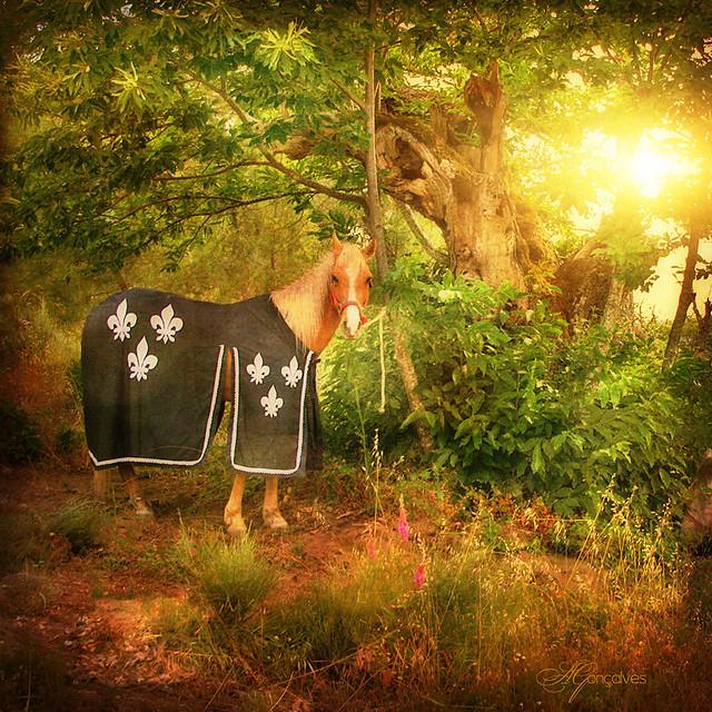 Cavalo (II)