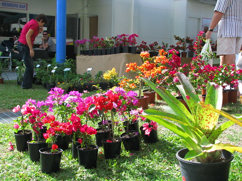 Selection of Bougainvillea cultivars for sale