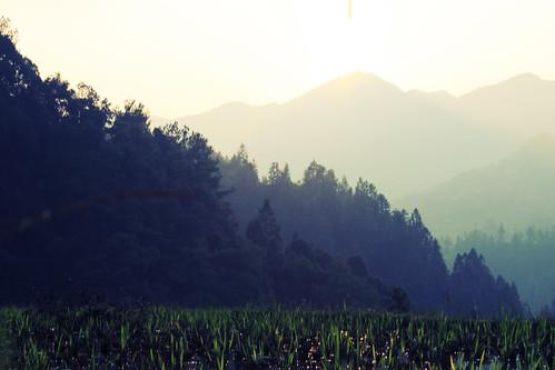 china mountains green grass sunshine vegetation trips greenery guizhou sooc