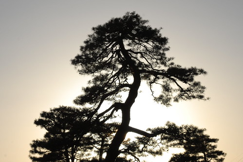sunset tree silhouette japan geotagged photos takayama geo:lat=3614001918 geo:lon=13725906372